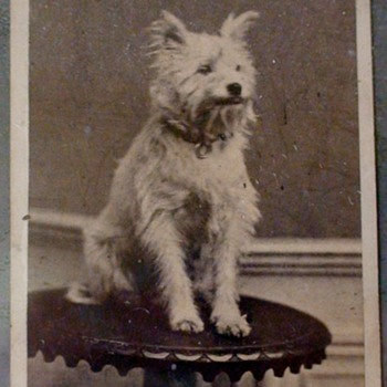 French  Carte de Visite Cute Dog