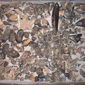 fossils,shark,whale,fish,teeth-ear bones,vertibrates++