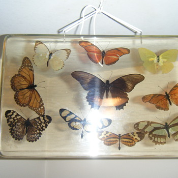 Vintage Stuffed Real Butterfly + Large acrilic display hanger - Animals