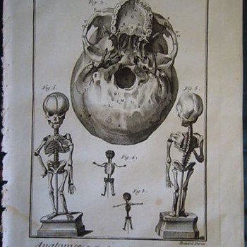 Early anatomical engraving (1778) - Posters and Prints