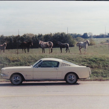 My first car Ford Mustang Fastback