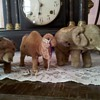 Vintage mohair & tin wind-up Circus Animals...1930's??