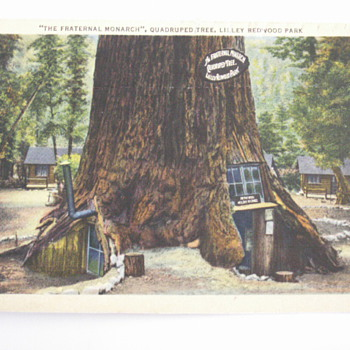More of the California Redwoods - Postcards