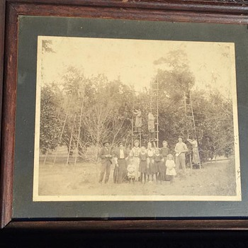 Antique Framed Photograph of Apple Orchard Workers