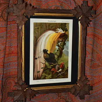Old German Bird-of-Paradise Print Framed - Posters and Prints