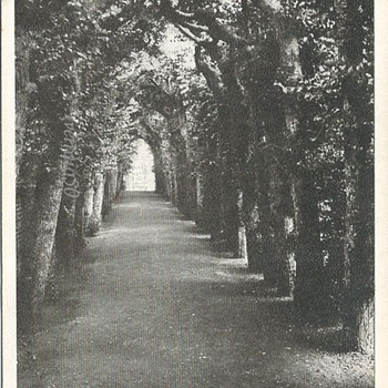 QUEEN MARY'S BOWER, HAMPTON COURT PALACE - Postcards