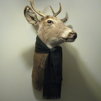 DEER DECOR FOR MY OFFICE  (REPOST) - Outdoor Sports