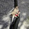 Boucher Bird Brooch