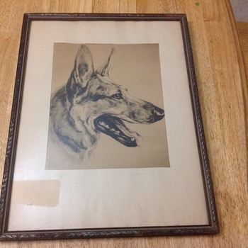 german sheppard pencil drawing by who named chief  - Animals