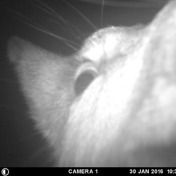 deer that taste cameras...