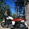 My Triumph Bonneville T100
