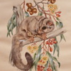 SUGAR GLIDER POSSUM - M.DAVIDSON