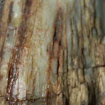 Petrified Wood part 2 Close Up - Fine Jewelry