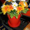 Phillips 66 flowerpot