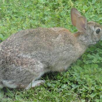 Rabbit lol