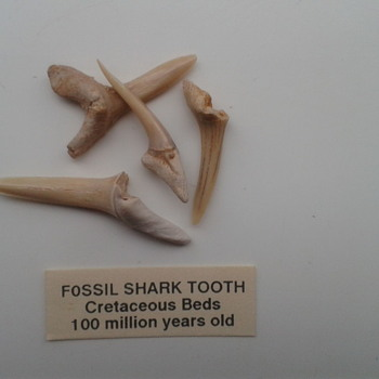 Fossil shark's teeth