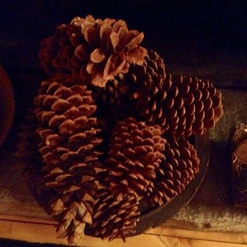 Big Pinecones from Big Trees