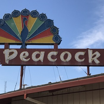 1950s  neon peacock sign