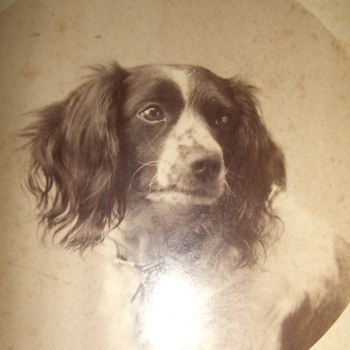 Cabinet card of a dog