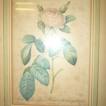 P.J. Redoute print