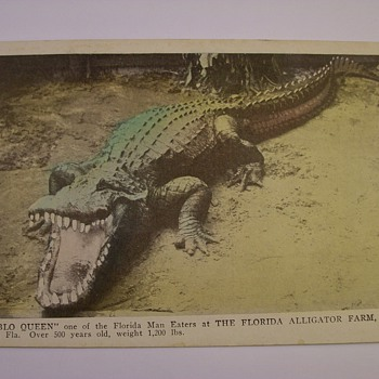 "1920's Alligator Farm Of Jacksonville Florida ""Tourist Postcards"""