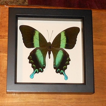 Various Framed Butterflies