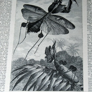 Finding interesting illustrations to frame and hang from old german newspapers - Paper