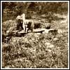 1895 Quebec Dog Sled Memory