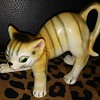 tiger stripe cat