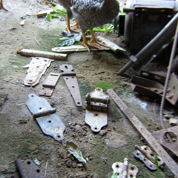 Hinges & chickens at the Wisconsin farm - Tools and Hardware
