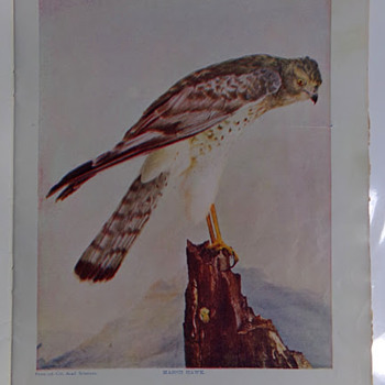 Birds, 1897