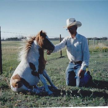 Canada farm  and family Minature Horse  - Photographs