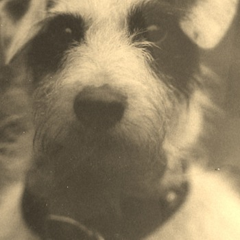 Rator The Terrier Art Photography 1921 By Rufus James Foster - Photographs