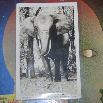 Vintage elephant photo - Animals