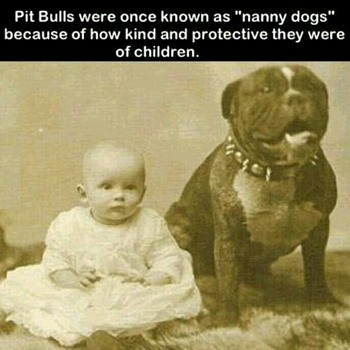 MID 1800'S PHOTO OF AMERICAS DOG OF CHOICE