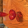 Vintage carnival glass,my great great grandmothers candle sticks,picture one red glass From 1920s