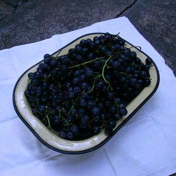 The old vine.