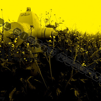Yellow Fire Hydrant Surrounded by Flowers and weeds Fine Art Giclee Print 11x17