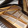 Wegman Grand Piano