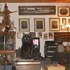 Carson the Cat and Count the Collectibles