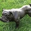 Bronze English Bulldog