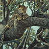 Robert Bateman  -  LEOPARD IN A SAUSAGE TREE &quot;  -  Signed Artist Proof