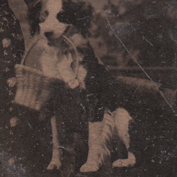Tintype Dog with a Basket Studio Prop or Good Dog!