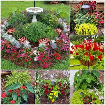My Garden 2017