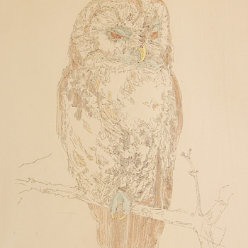 Tawny Owl by William Crutchfield - Handcolored lithograph