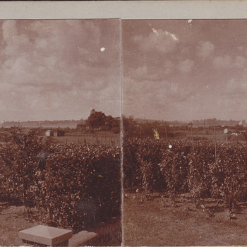 Stereoview - Private35