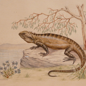 TWO AUSTRALIAN LIZARDS - M. DAVIDSON