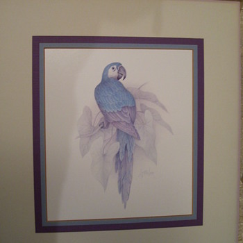 Blue Parrot by 'Harrison'