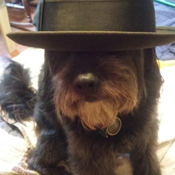vintage beaver hat