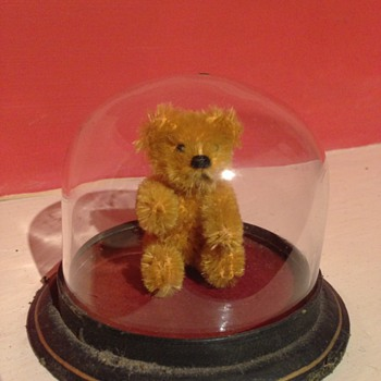 A old tiny teddy in a glass case